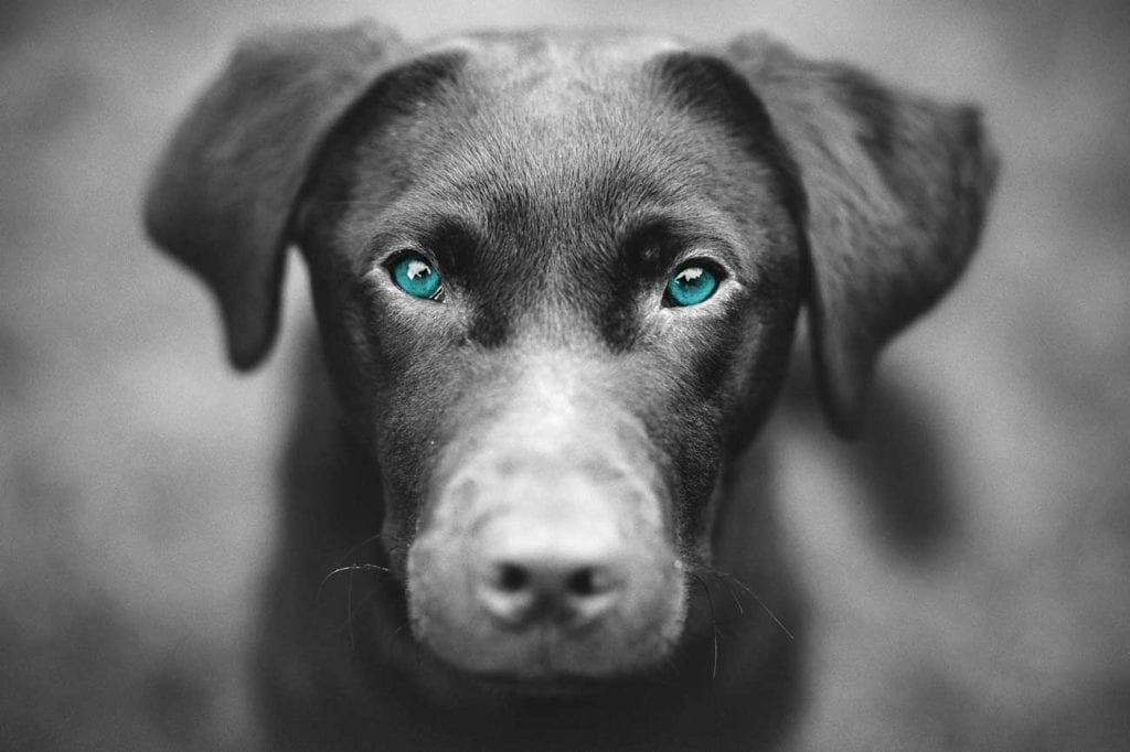 sanderson vet vets veterinary heswall wirral